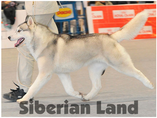 Silverlight de Siberian Land